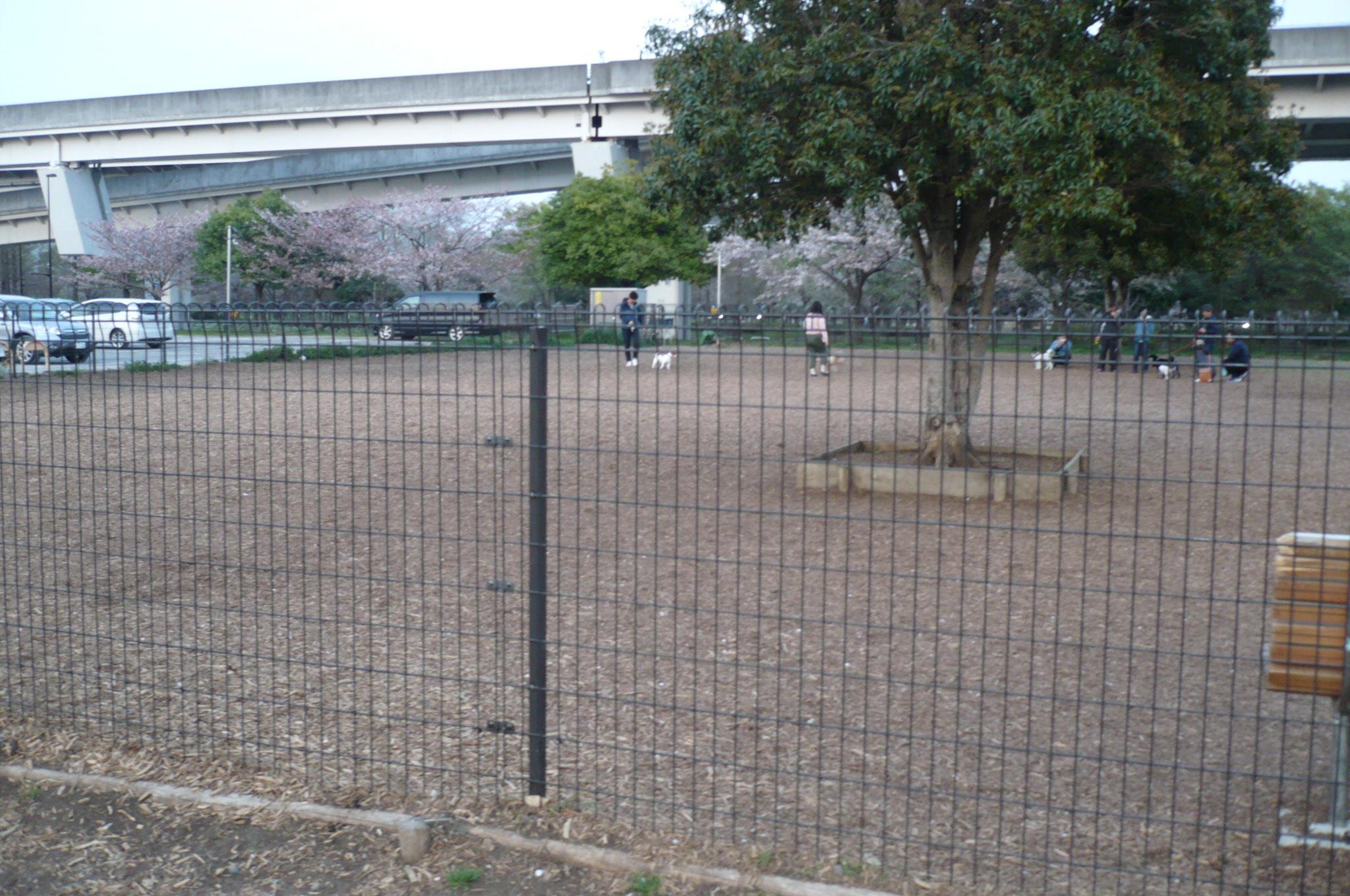 公園 ドッグラン 舎人